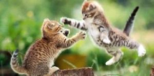 flying cat fight